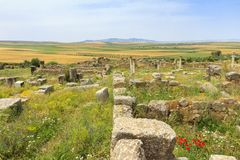 Ancient Volubilis city ruins in Morocco stock images