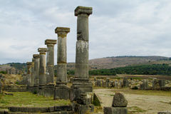 Ancient Volubilis town columns Royalty Free Stock Images