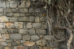 Free Ancient Wall And Roots Stock Photo - 939280