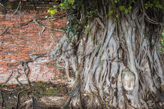 Ancient Wall and Head of Buddha statue in the tree roots at Wat Mahathat Stock Image