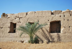 The ancient wall of Karnak temple in Luxor, Egypt. The palm on the background of ancient wall of Karnak temple in Luxor, Egypt Stock Image
