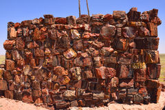 Ancient wall of petrified wood Stock Image