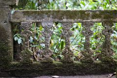 Ancient wall ruins in rain forest Royalty Free Stock Image