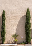 Ancient white wall. With rough plaster texture framed with two cypress trees Royalty Free Stock Image