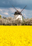 Ancient windmill. Surrounded by yellow rape field Stock Image