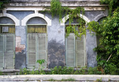 Ancient windows and wild plant royalty free stock image