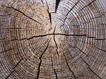 Ancient wood Stock Images