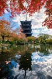 Ancient wood Toji temple reflection pond in maple leaves garden. At Kyoto, Japan Royalty Free Stock Photo