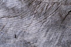 Ancient wooden. Royalty Free Stock Photography