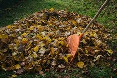Ancinho da folha e pilha das folhas Imagens de Stock