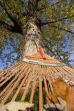 Ancinho e árvore Imagens de Stock