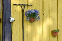 Ancinho e vasos de flores velhos de jardim com as flores na parede Fotos de Stock