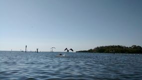 Anclote海滩 库存图片