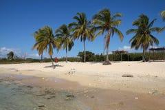 Ancon Beach, Cuba. Cuba beach landscape - palm trees at Ancon Beach, Trinidad Stock Image