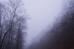 Ancora terreno boscoso Fotografia Stock Libera da Diritti