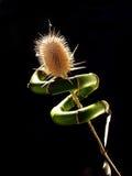 Ancora-vita con bambù Fotografia Stock Libera da Diritti