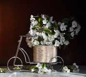 Ancora vita con i fiori della ciliegia Fotografia Stock Libera da Diritti