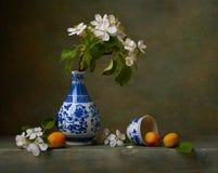 Ancora vita con i fiori della mela Fotografia Stock Libera da Diritti