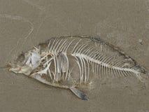 Ancora-vita con i vecchi pesci Immagine Stock Libera da Diritti