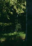 Ancora vita con l'albero di larice della sorgente Fotografia Stock