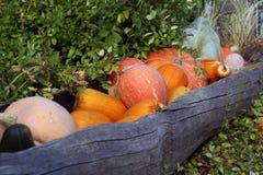 Ancora-vita delle zucche con sfondo naturale immagini stock
