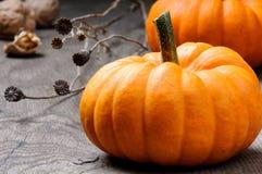 Ancora-vita di autunno con le zucche Fotografia Stock
