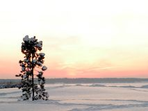 Ancora-vita di inverno Fotografia Stock