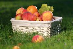 Ancora-vita di picnic Fotografie Stock