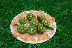 Ancora vita 1 Frutti in un piatto sull'erba Fette del mandarino e del kiwi fotografia stock libera da diritti