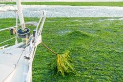 Ancrant dans le domaine d'algue, Waddensea, Pays-Bas Photos stock
