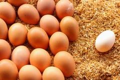 Andägg och fega ägg Royaltyfria Foton