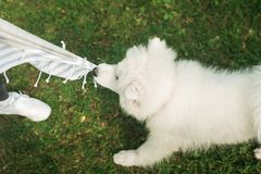 Anda seu cão branco no parque imagens de stock royalty free