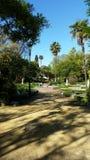 Andalousie. Jardin park garden palmier Royalty Free Stock Photography