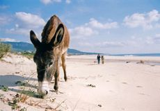 andalucia海滩驮货驴子西班牙 库存图片