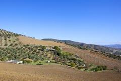 Andalucian finca eller småbruk med olivgröna dungar royaltyfria foton