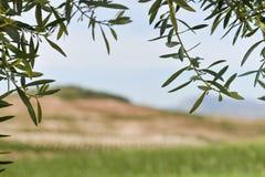 Andalusia coutrysideexemplaar ruimte zuidelijk Spanje Stock Foto's