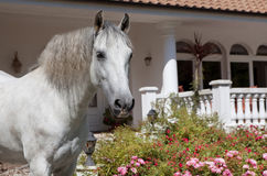 Andalusia Finca ago Royalty Free Stock Image