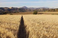 Andalusia landskap i Olvera område Royaltyfria Bilder