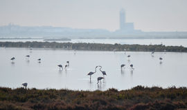 ANDALUSIA WETLANDS. Cabo de Gata Natural Park in Andalusia, Spain. Saltpans and Wetlands Stock Photography