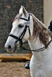 Andalusian, Bridle, Tack, Bit Stock Images