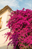 Andalusian charm Stock Photos