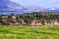 Andalusian countryside, Spain. Royalty Free Stock Image