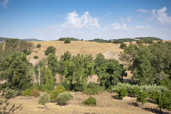 Andalusian countryside Royalty Free Stock Photography
