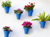 Andalusian decoration with typical flowers pots Royalty Free Stock Photos