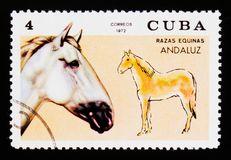 Andalusian Equus ferus caballus, Horse breeds serie, circa 1972 Royalty Free Stock Image