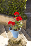 Andalusian geranium Stock Image