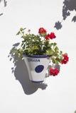 Andalusian geranium, Cordoba Royalty Free Stock Images