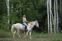 Free Andalusian Horse Galloping Near The Woods Stock Image - 214702391