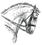 Andalusian horse hand drawing illustration Royalty Free Stock Images