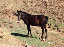 Andalusian horse on pasture Royalty Free Stock Images
